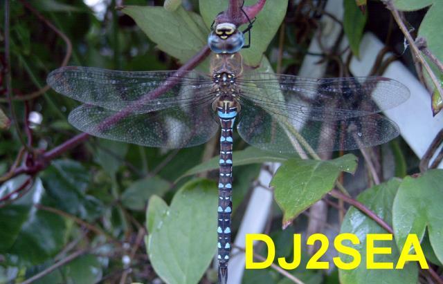 Current QSL card of DJ2SEA